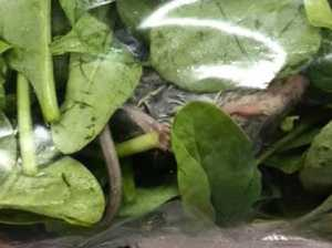 Woman finds dead rodent in salad