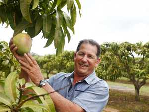How our mango exports to China could grow 200 per cent