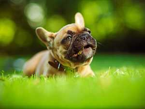Bikie: '$100k from puppies, not crime'