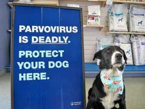 Six parvovirus detections this year