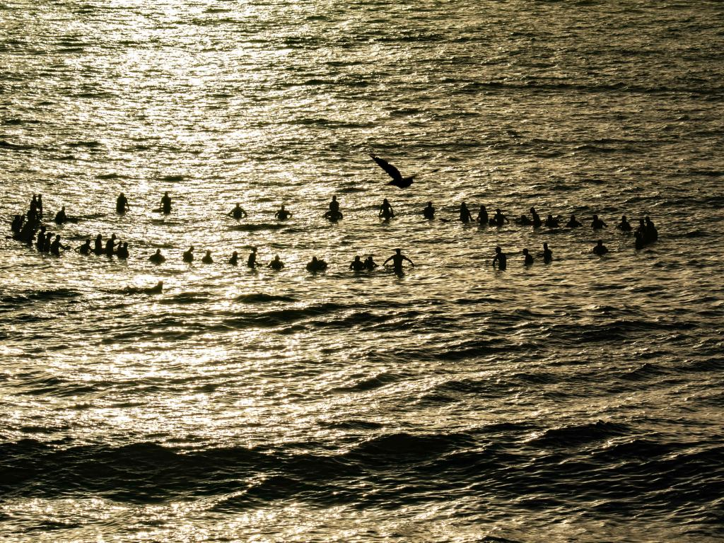 Magical: Surfers form a circle around the frangipani reef they took out to sea. Picture: Monique Harmer