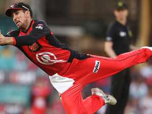 Finch set to return for victorious Renegades