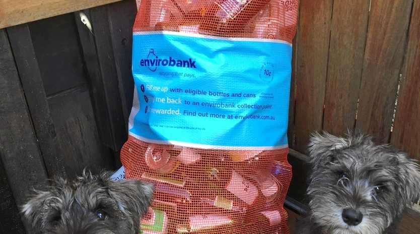 Tewantin State School are involved with Containers for Change with drop-offs between 8:15-9:00am where Lola and Archie will be awaiting bags.
