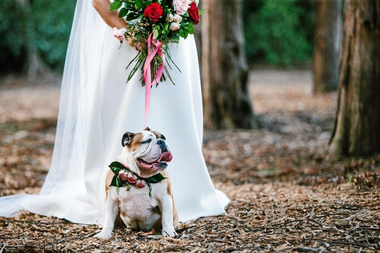 Tyson & Natasha Hall married at Gabbinbar Homestead with their dog Shelly by their side.