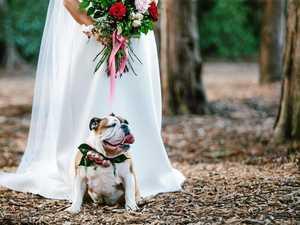 Dog models wanted for wedding photoshoot at Gabbinbar