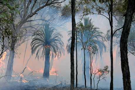 FIERY: Bushland on fire in the Mt Kelman area.