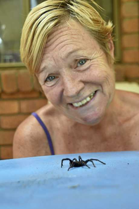 Cabarlah woman, Tami Mills, found a dead funnel web spider under her bed.