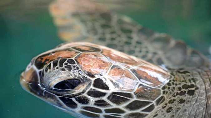 'Heartbroken': Centre remembers friendly turtle Frankie