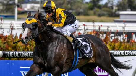 Trapeze Artist will spearhead Gerald Ryan's team for the Sydney autumn carnival. Picture: AAP