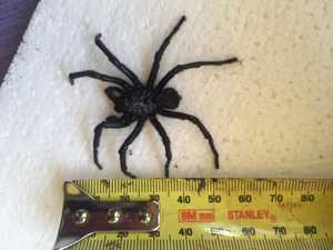 Woman shocked after finding deadly spider under bed