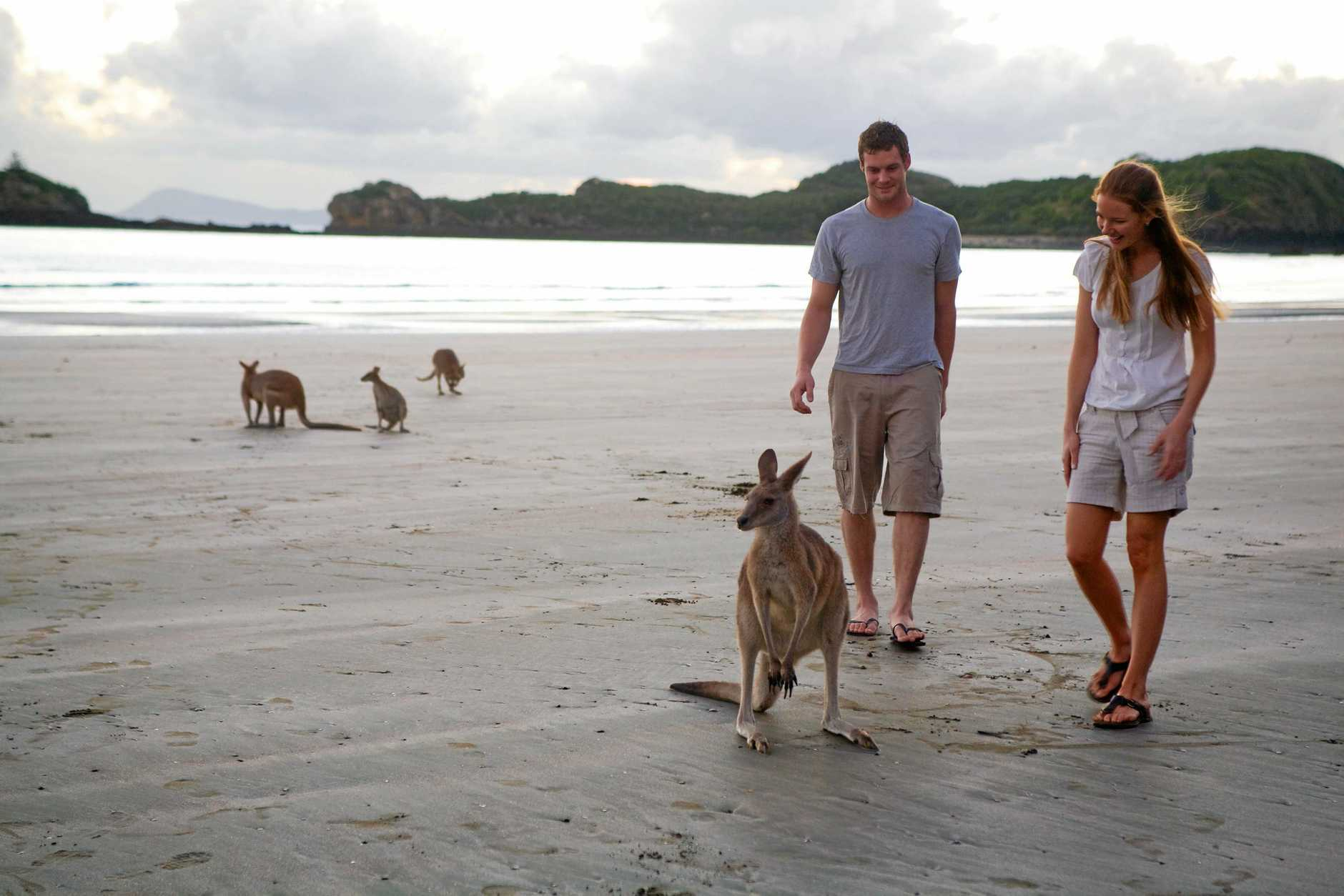 Cape Hillsborough National Park attracts tourists from all over the world.