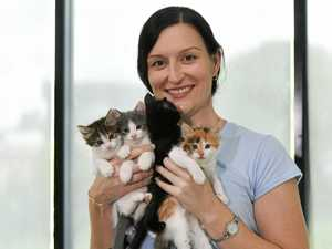It's a purr-fect weekend to adopt at RSPCA