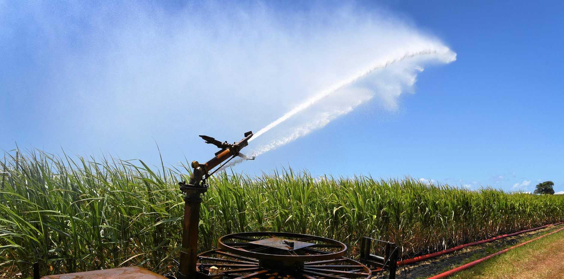 Irrigation along Innes Park Road.