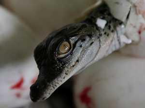 Croc farm hits back at Terri Irwin