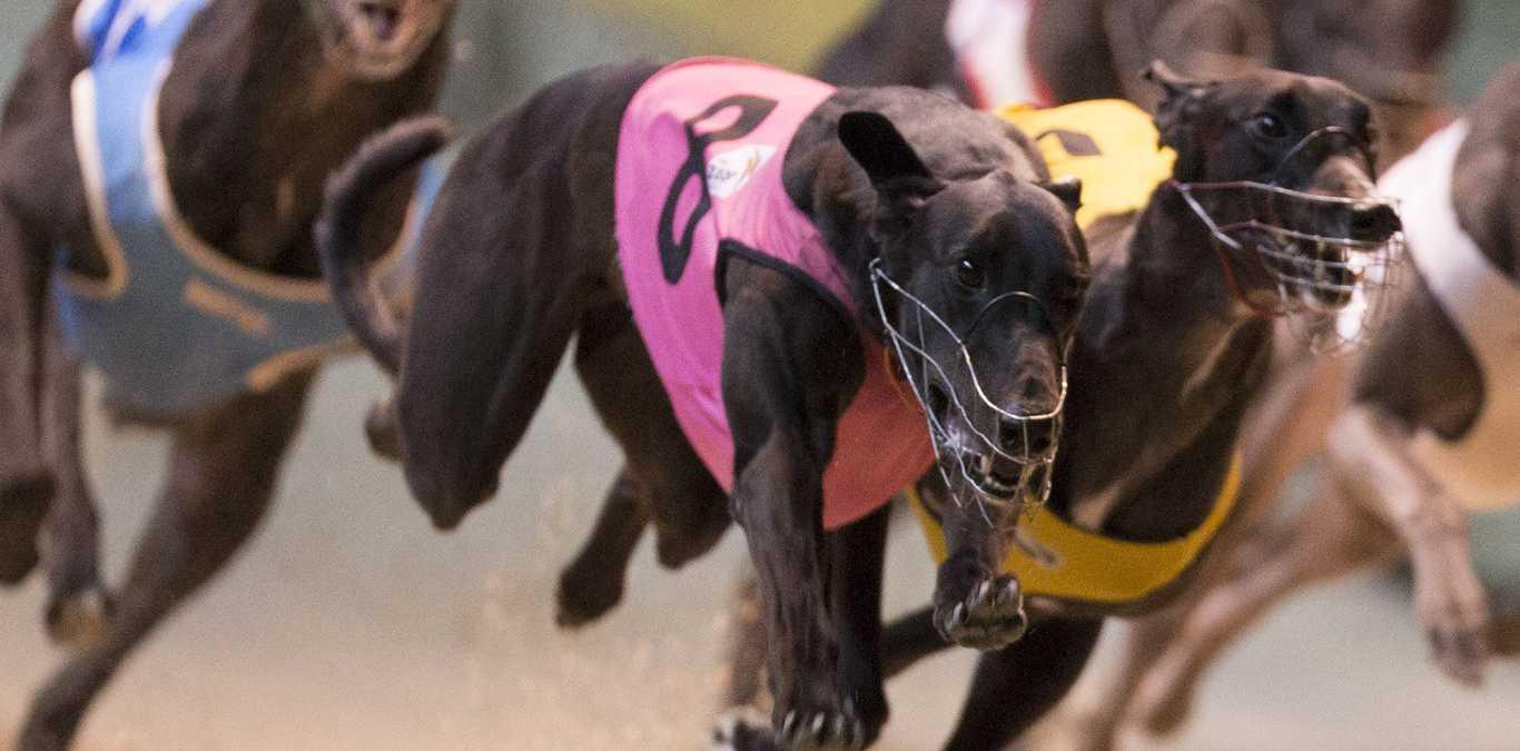 Lismore Greyhound track. is closed indefinitely