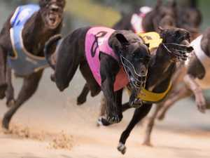 CLOSED: 'Unacceptable' injuries at Lismore greyhound track