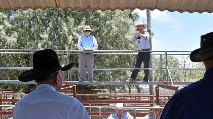 GLUT FEARS: George and Furhmann auctioneer Maugan Benn on the catwalk at the Warwick Saleyards on January 15.