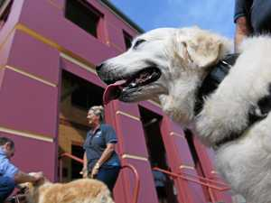 Therapy dogs 'repawt' for duty at court