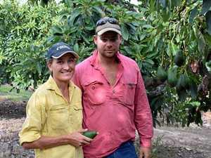 Not a great season for CQ mango farmers