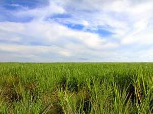 M'boro sugar mill's $101m injection to region