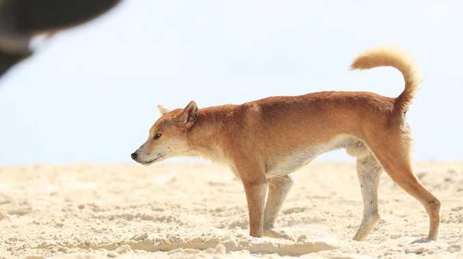 Savage threat lurking in island paradise