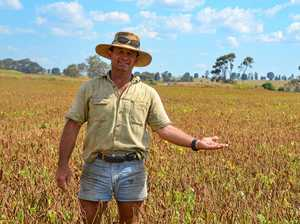 Diversity gives boost to Monto economy