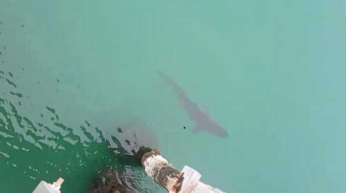 Fisho's fight with a 2-metre shark in the harbour