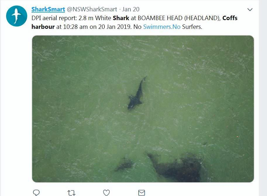A 2.8m shark off Boambee Headland.