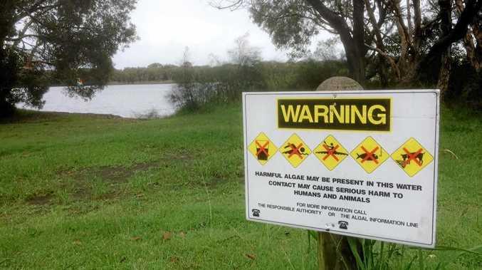 Ballina Shire Council says levels of blue-green algae at Lake Ainsworth have increased.