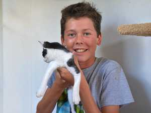 Animals at the RSPCA Kingaroy