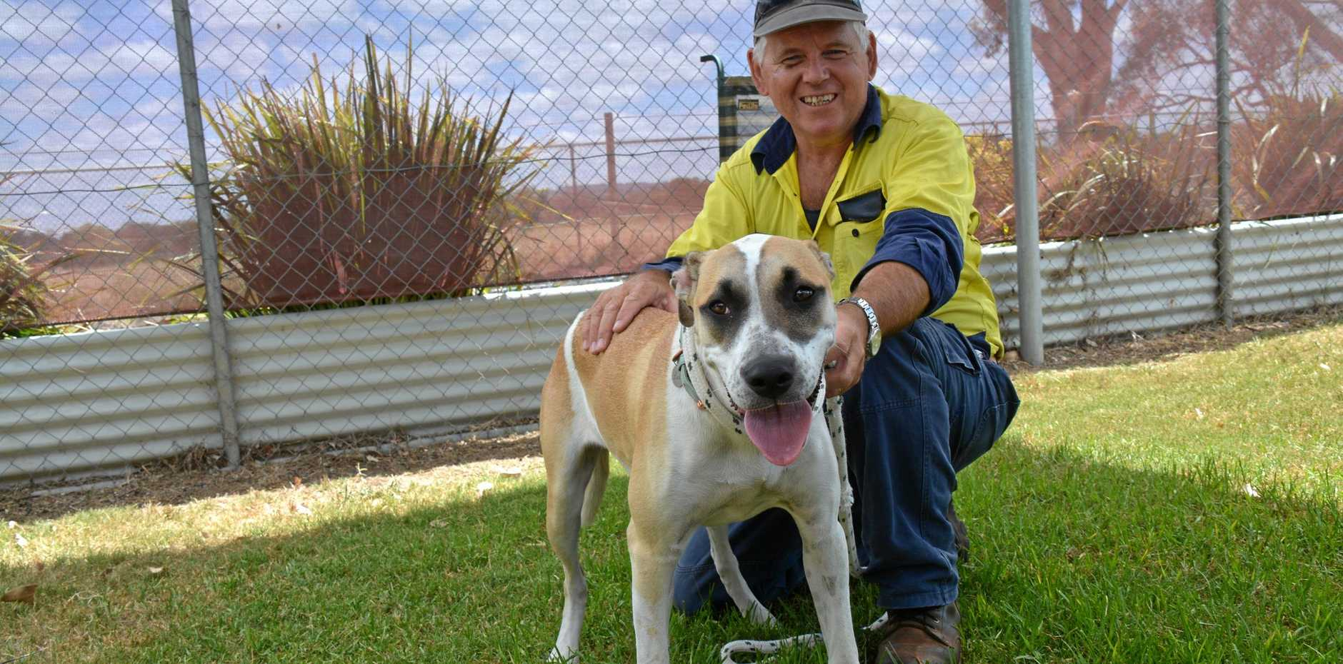 ADOPTION: Kingaroy RSPCA volunteer Shayne Young plays with six-month-old Bull Arab mix Ella while she waits for her forever family.