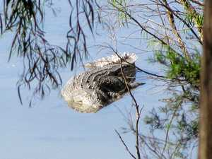 Authorities set traps on Fitzroy River for 3m crocodile