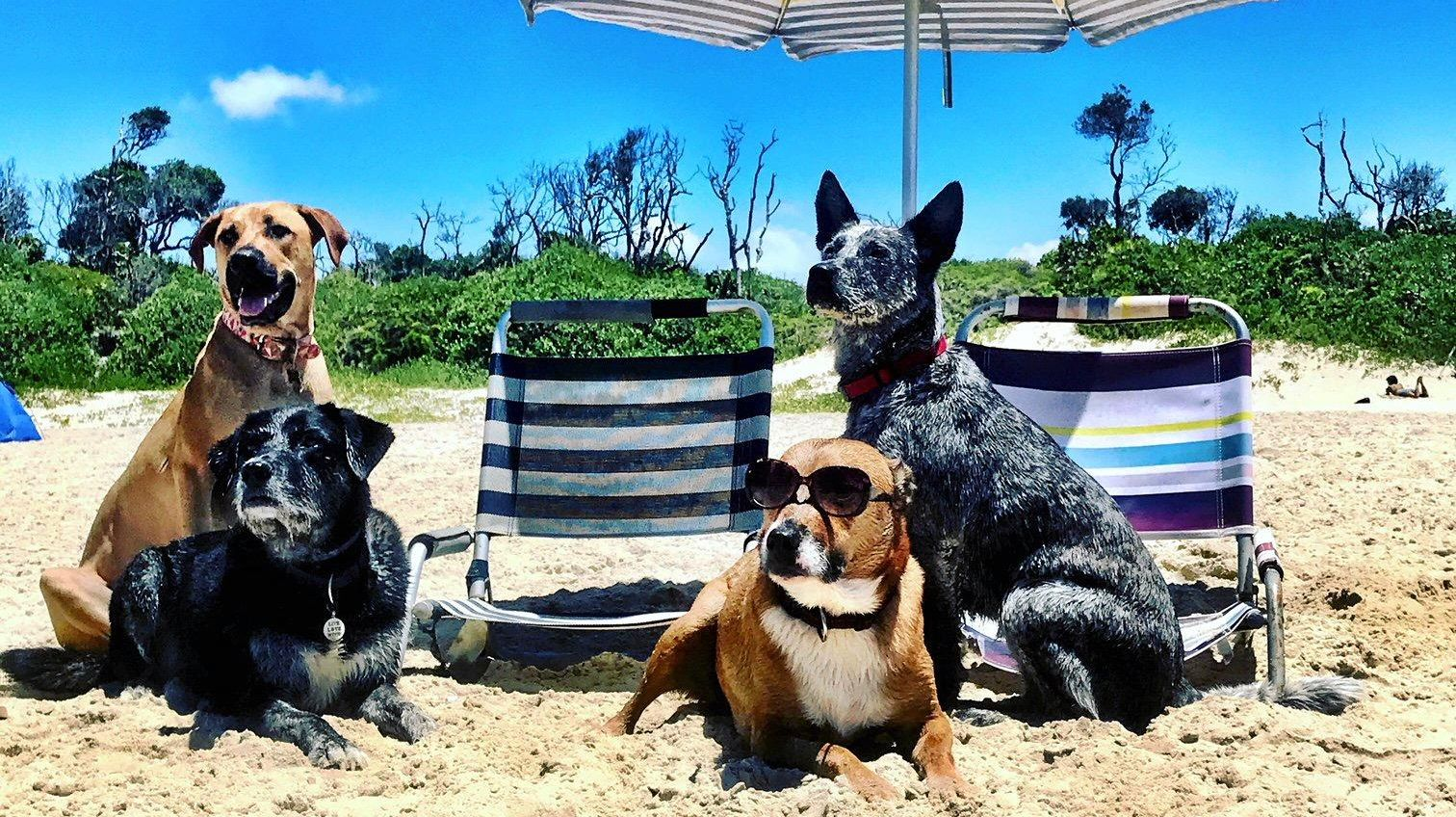 Dogs on beaches are causing issues, says Greg Barnes.