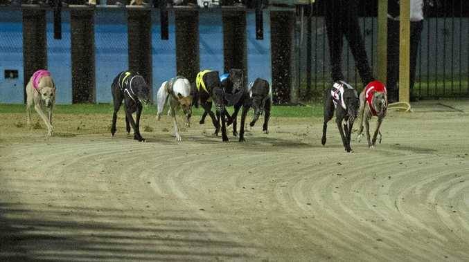 BACK ON TRACK: Greyound racing will return to Lismore on Tuesday following the sudden closure of its track last week.