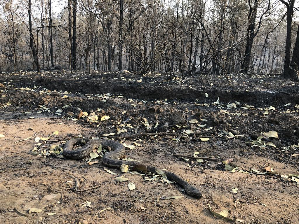 """Pictures supplied by Tom Marland of his burnt out property. """"A 30 year old carpet python we found burnt on one of our breaks."""""""