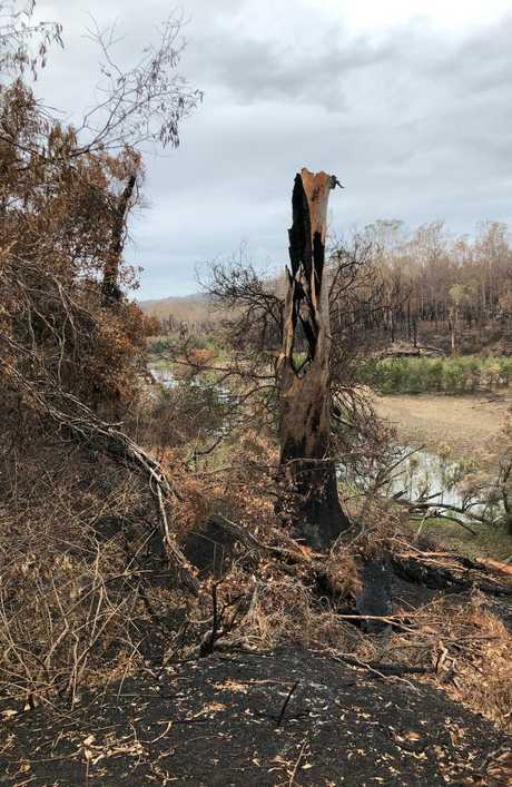 Pictures supplied by Tom Marland of his burnt out property including what he says is an 'old' blue gum destroyed on the banks of the Kolan River.