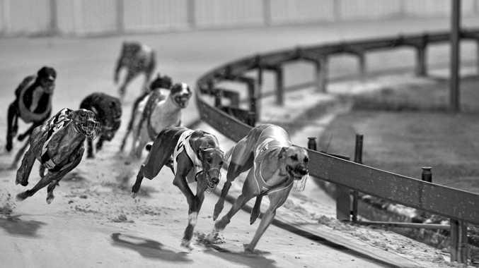 Greyhound racing at Lismore.