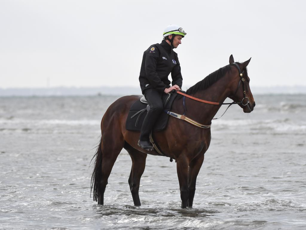 Winx cools off at Altona Beach. Picture: Getty Images