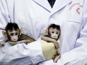 Mutant monkey experiment slammed