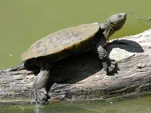 Subdivision proposal puts turtles 'at risk'
