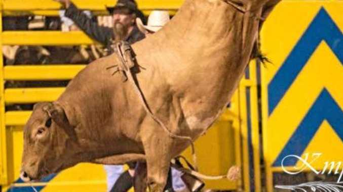 CHALLENGING RIDE: Bucking bull Let's Rock will make it difficult for Cowboys.