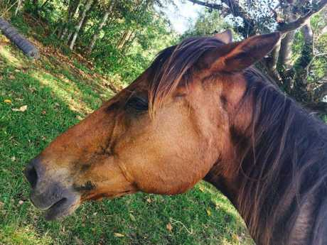 Her abusers want her silent so badly, even her horse was killed by a stalker.