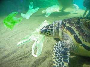 Volunteer divers collect almost 350kg of marine debris
