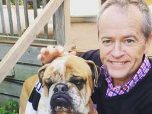 'We'll miss you mate': Shorten mourns bulldog