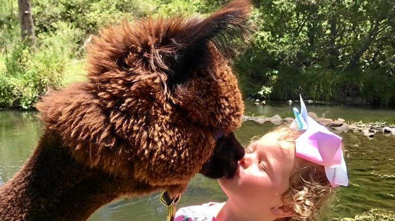 Kiss at the Alpaca farm.