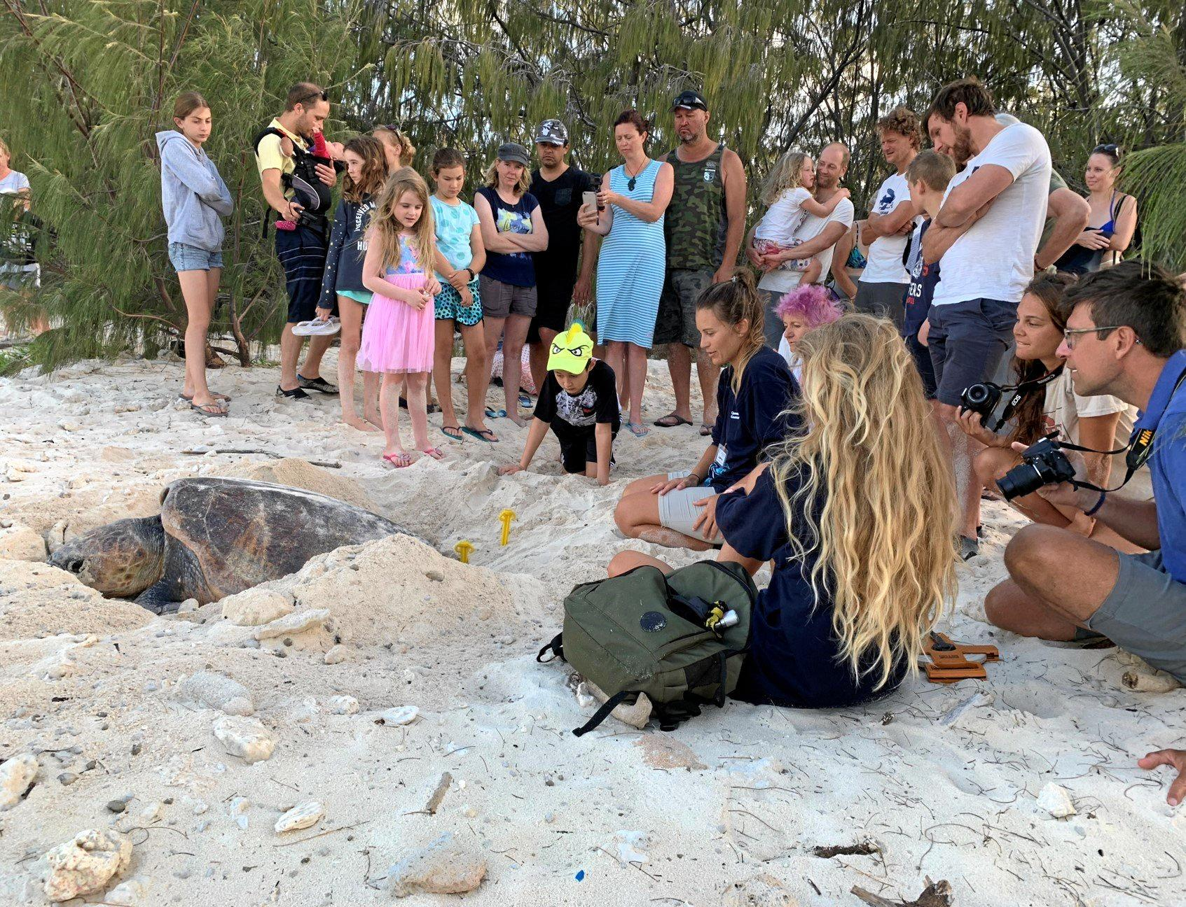 Queensland Turtle Research Program volunteers Jasmine Burgan and Zoe Truscott with a nesting loggerhead turtle at Heron Island last week.