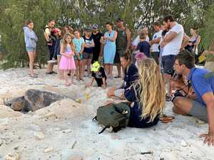 'Magical' moment at Heron for volunteer turtle researchers