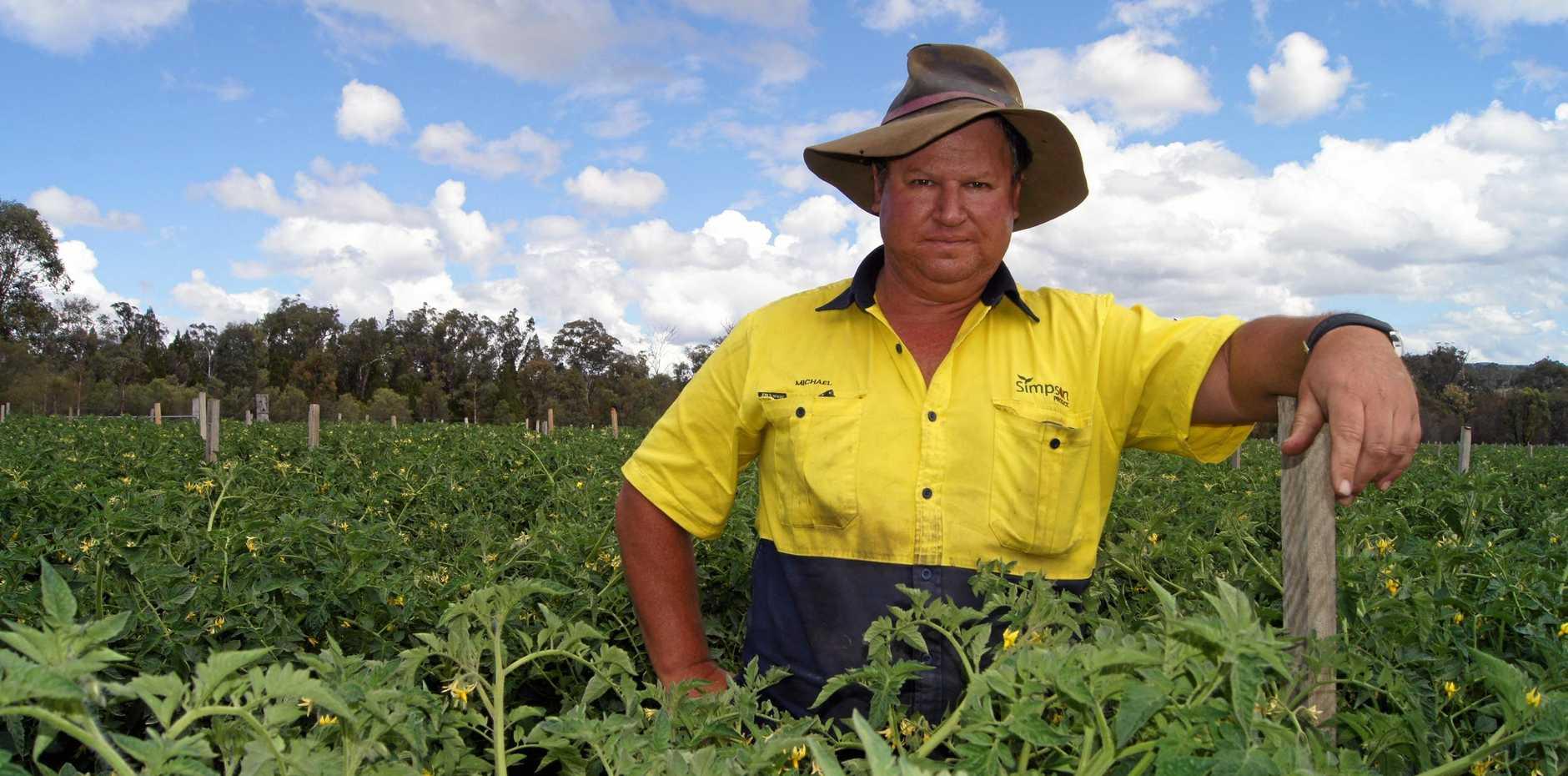 CLOSE CALL: Ballandean farmer Michael Simpson was riding through his tomato farm when he was bitten by a tiger snake.