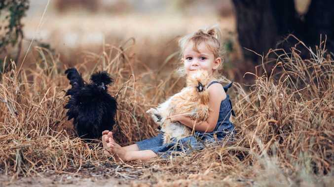 BARNYARD FUN: Jade Davies's daugther, Aliyah Wynter, with some of the family's chickens.