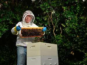 Beekeepers buzzing after sweet expansion success